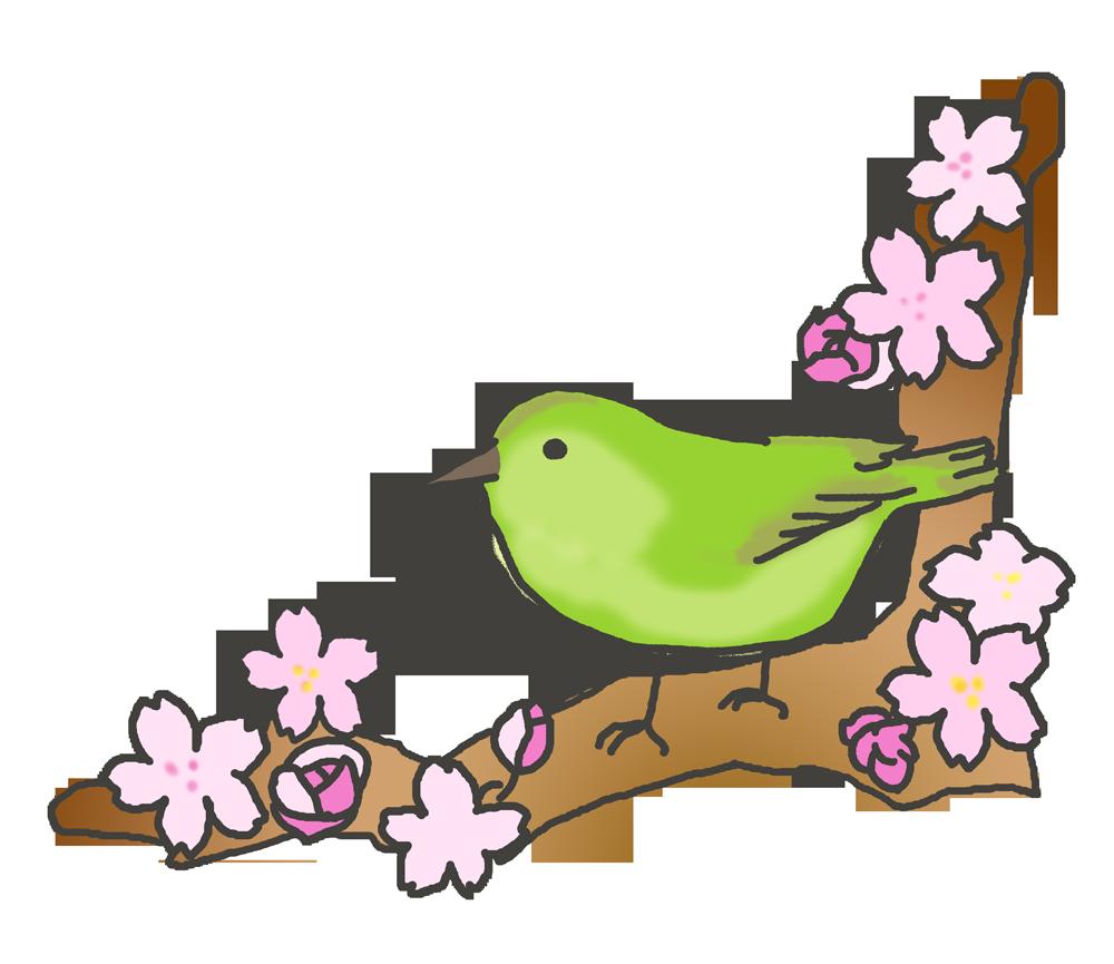 ウグイスと桜のイラスト