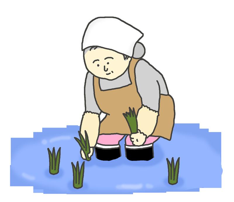 田植えをするおばさんのイラスト