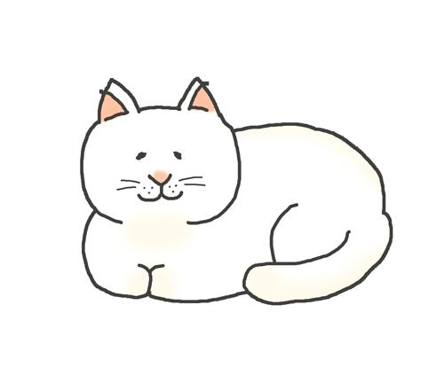 香箱座りをする白猫