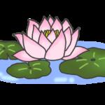 睡蓮のイラスト