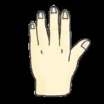 左手の甲のイラスト