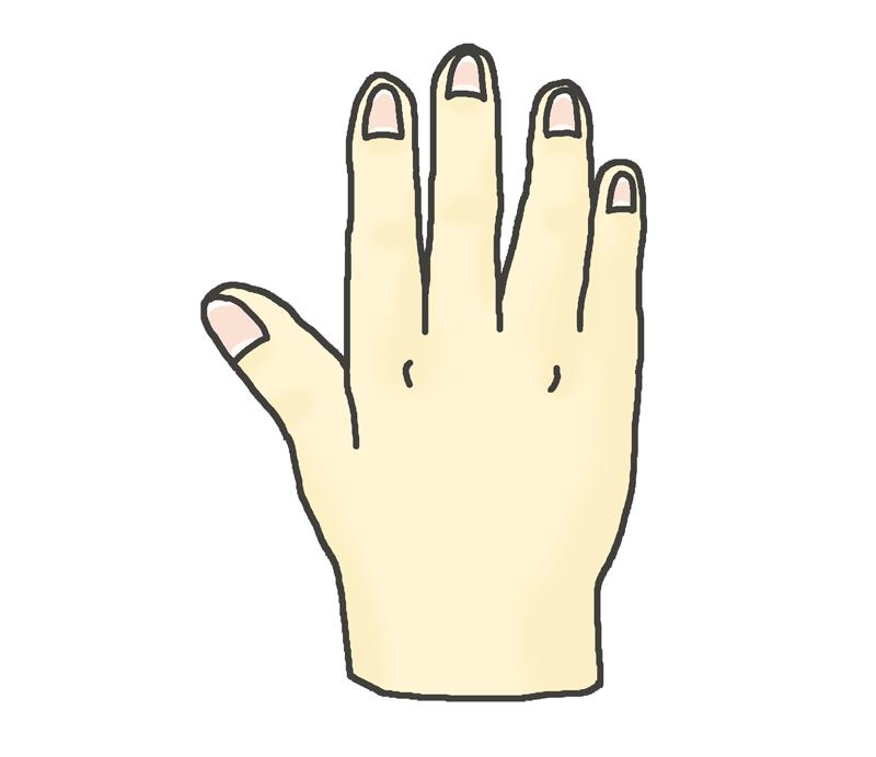 右手の甲のイラスト