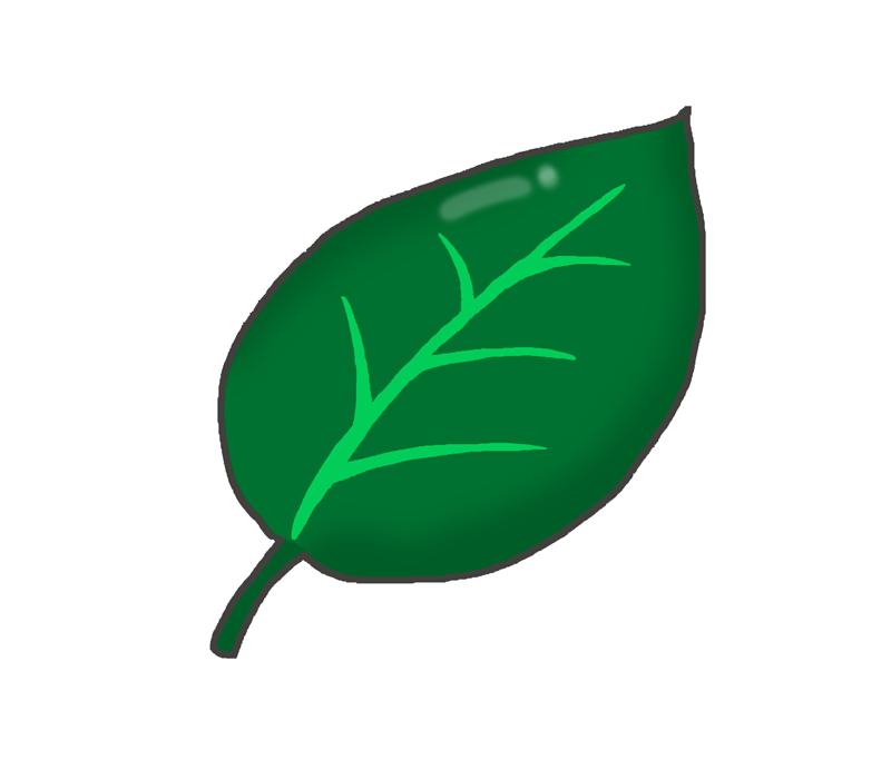 濃い緑色の葉っぱのイラスト