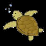 海亀のイラスト