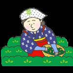 茶摘みをする女性のイラスト