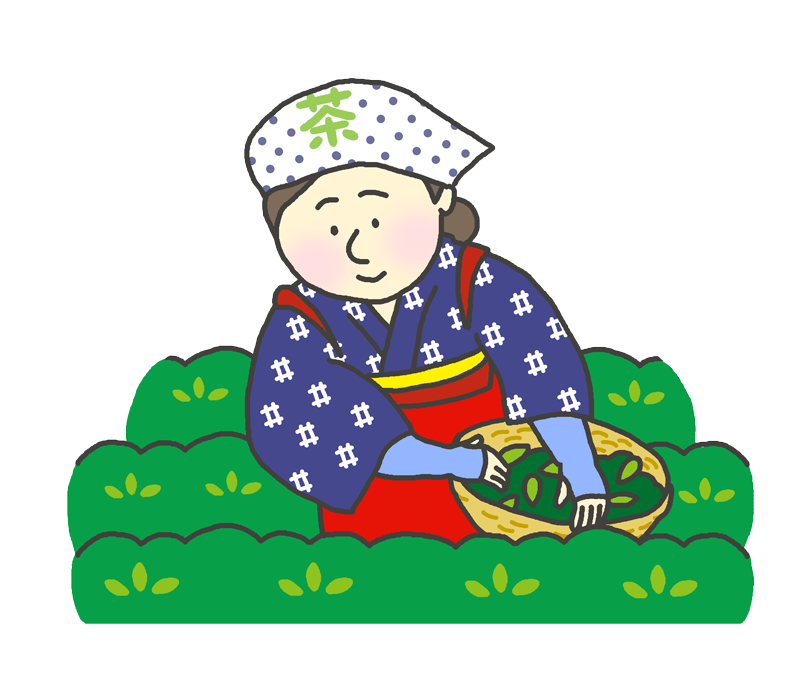 お茶つみをする女性のイラスト