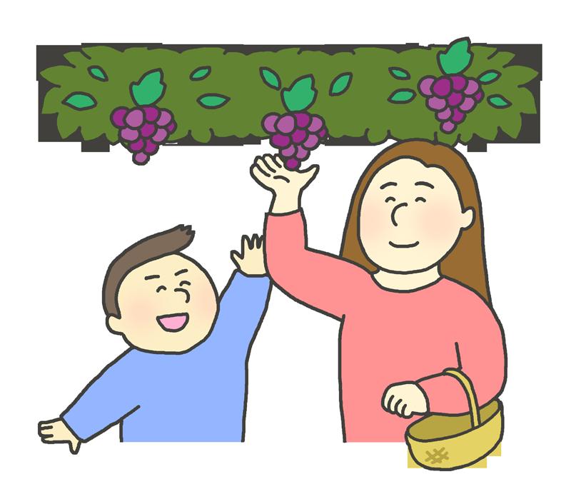 ブドウ狩りのイラスト