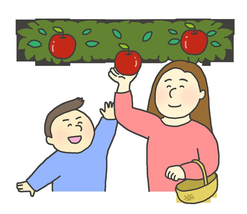 りんご狩りのイラスト