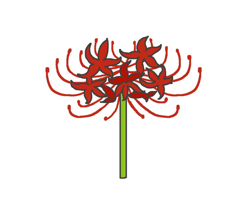彼岸花(ヒガンバナ)のイラスト