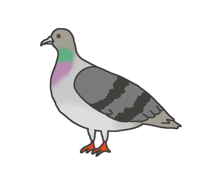 鳩のイラスト(鳥)