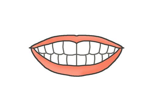 健康な白い歯のイラスト