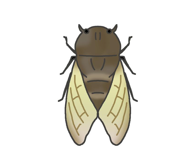 蝉のイラスト
