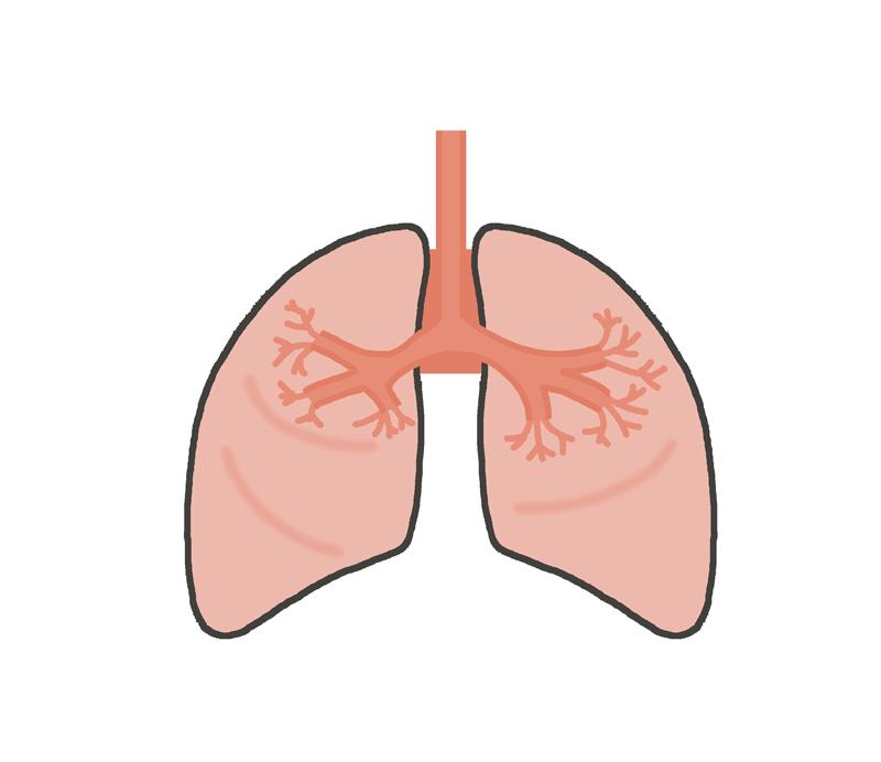 肺のイラスト