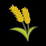 麦(ムギ)のイラスト