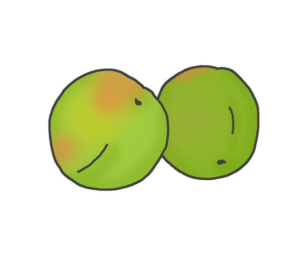 梅の実のイラスト