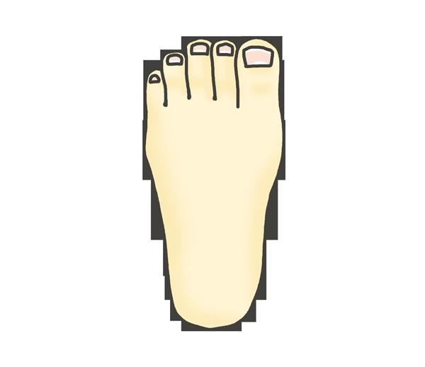 足の甲(左)のイラスト