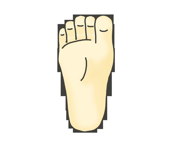 足の裏(左)のイラスト