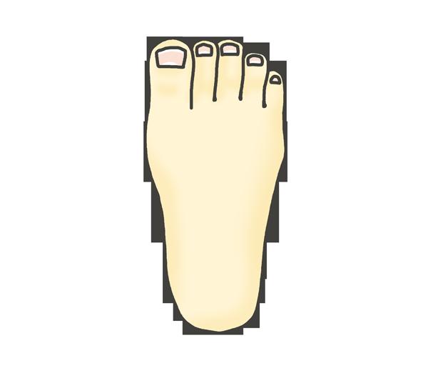 足の甲(右)のイラスト
