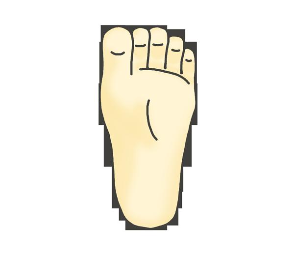 足の裏(右)のイラスト