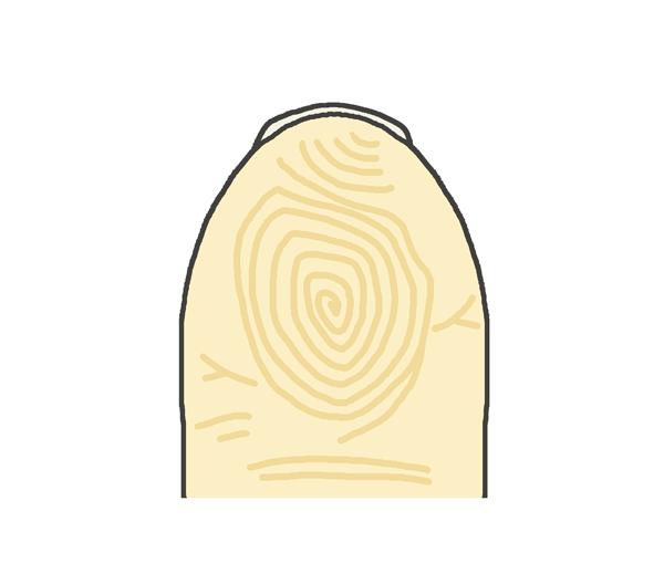 指紋のイラスト