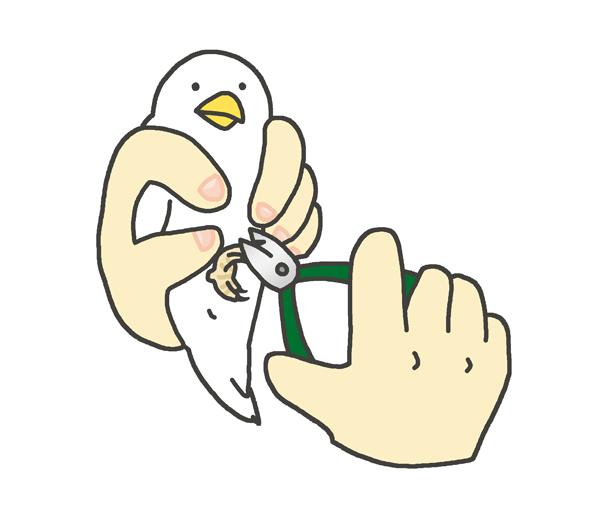 小鳥の爪切りのイラスト