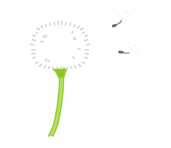 たんぽぽの綿毛のイラスト