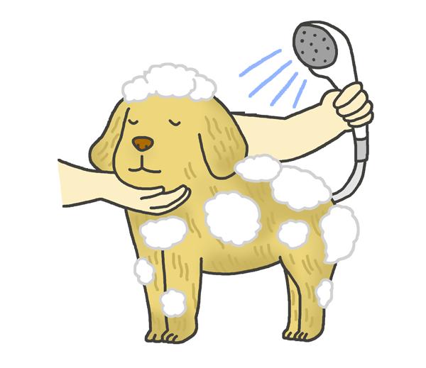 犬のシャンプーのイラスト